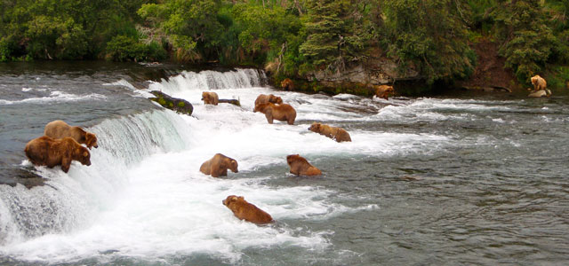 bear-viewing-brooks-falls