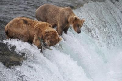 Photo: by-Swirski-Family-Alaska-bear-viewing-salmon-waterfall
