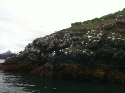 Gull Island, Homer, Alaska, Fly-Hike-Boat